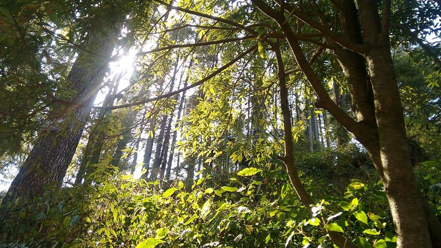 Beautiful Nature Travel Diaries Nature_collection Sunlight Through Trees Forest Hills Forest Photography Taking Photos AJ Photography Ecopark Dhanolti