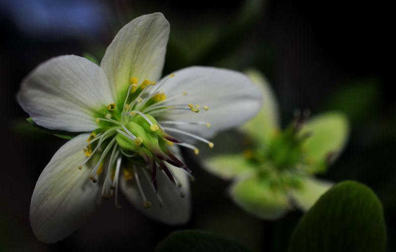 Last flowers.