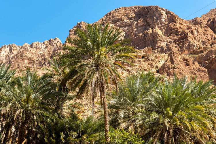 Palm trees growing on rock against sky