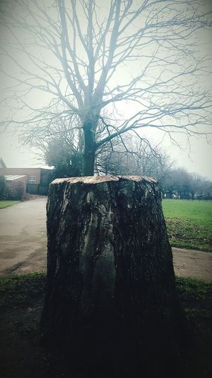 Before Ten Tree Tree Trunk Outdoors Bare Tree Nature Sky Tree Stump Why? In The Park