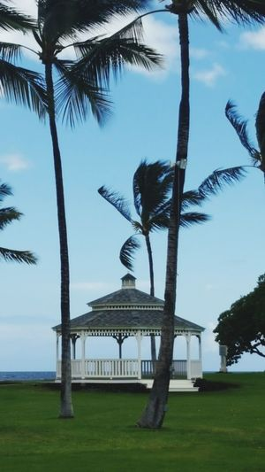 Hawaiian Palm Trees Swaying Gazebo Beach Fairmont Hotel Fairmont Orchid Resort Ocean View