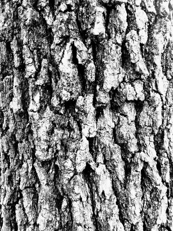 Corck Textures And Surfaces Rough Tree Tree Trunk Old Skin Skins Scratch Neutrogena Enchanted Forest Wood Years Nature Nature_collection Nature Photography Naturelovers Natural Beauty Warmth Feeling Warm Warmth On A Wnter Day Textured  Close-up Growth Bark Backgrounds Full Frame No People Wood - Material Cracked