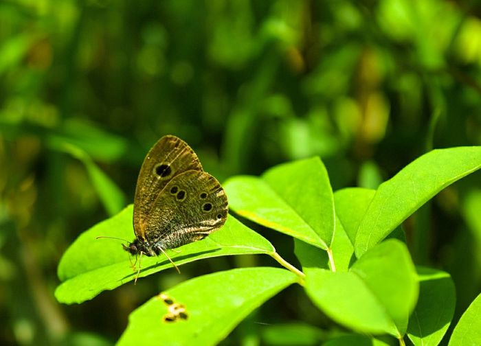 Animal Wildlife One Animal Leaf Animals In The Wild Green Color Insect Plant Nature Animal Close-up Animal Themes No People Day Outdoors Butterfly - Insect Full Length Perching Beauty In Nature