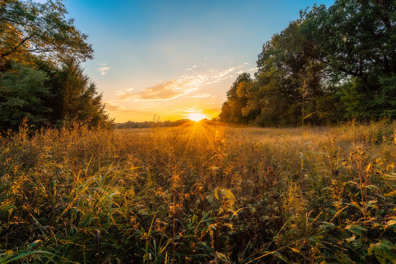 Beauty In Nature Bright Environment Field Growth Land Landscape Nature No People Non-urban Scene Outdoors Plant Rural Scene Scenics - Nature Sky Sun Sunlight Sunset Tranquil Scene Tranquility Tree