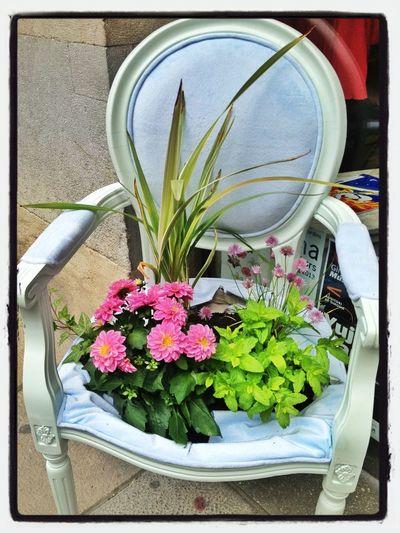 Flores En El Culo?  #tempsdeflors #tiempodeflores #girona #spring #primavera