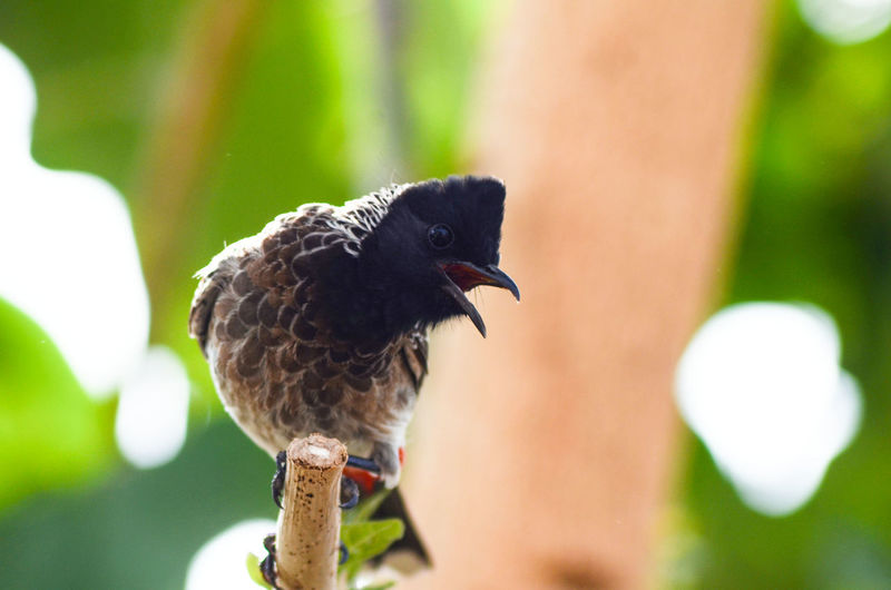 Bird Nature Beauty In Nature Bulbul Bird Barkingbeauty