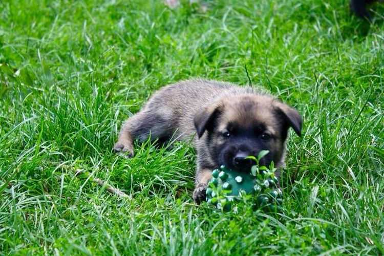 Welpe Welp Dogslife Hund Best  Canonphotography Canon Fun Love Friends Photography Photo Wounderful Lovely Selfmade Puppy Dog Playing