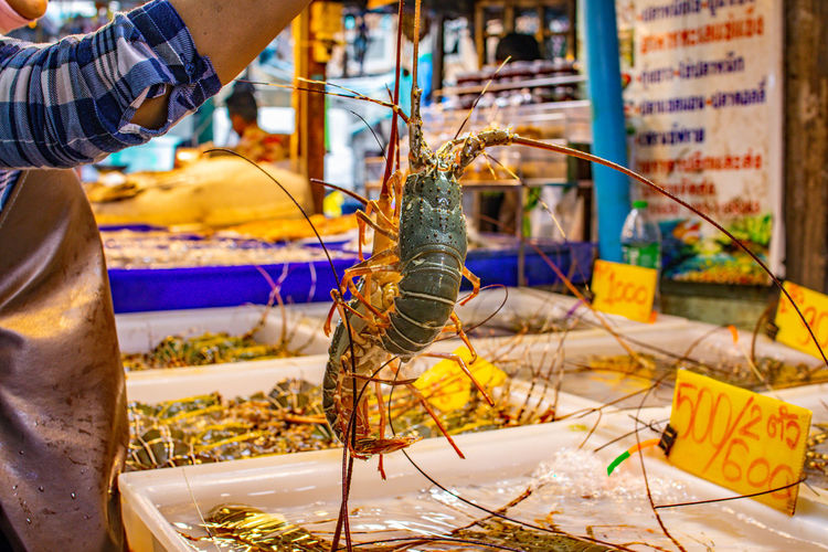 Close-up of insect for sale at market