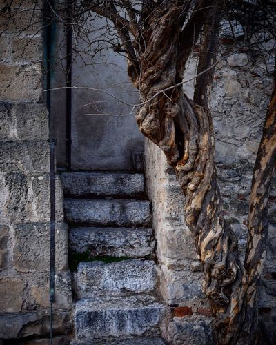 Asolo - Phototour 2017 Architecture Detail 2017 Phototour Italy Asolo Day No People Ancient Outdoors Nature Tree