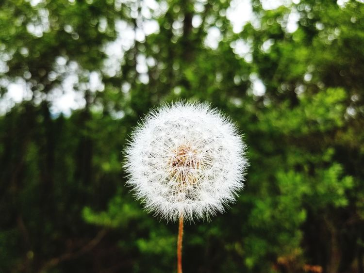 EyeEm Selects EyeEm Best Shots EyeEm Nature Lover Tree Flower Head Flower Circle Close-up Plant Dandelion Uncultivated Dandelion Seed Plant Life Hope