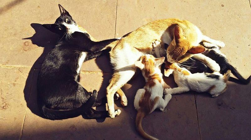 Cat♡ Mommy Mommy Life Mother Hood Feeding  Love Catlife Kittens Little Ones ♥♥♥