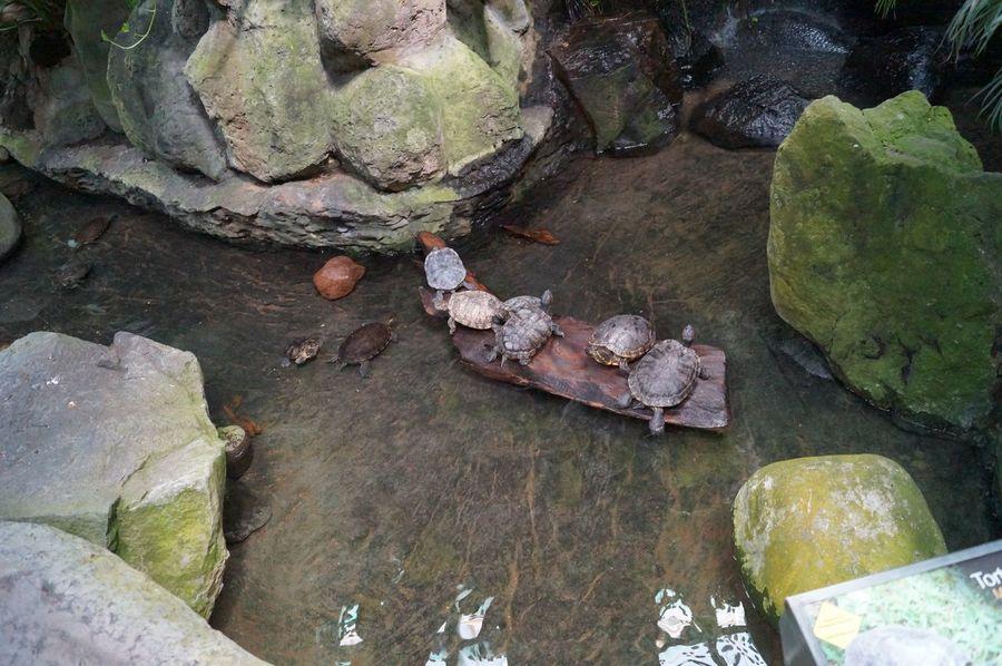 #animal #captivity #estanque #naturecolors #park #Pets #tortugas #Turtles