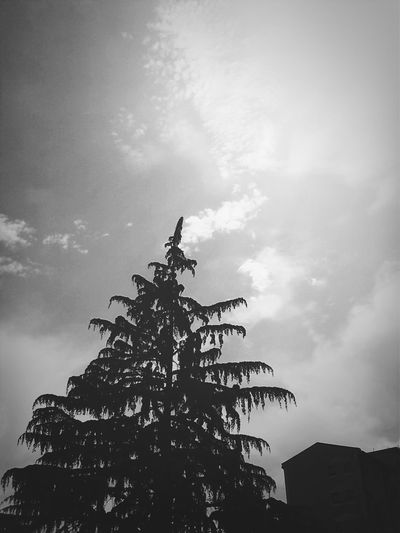 Hugging A Tree Black And White Streetphoto_bw Good Morning World!