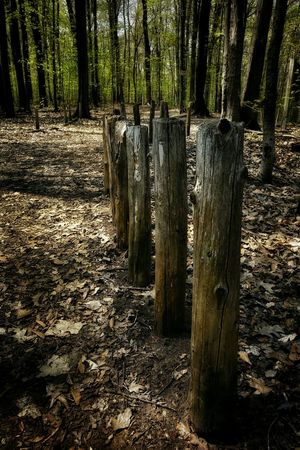 Wood Post Fence Natural Fence In The Woods Walking In The Woods Forest Nature Beauty Dead Leaves Forest Floor Path Path In Nature Forest Path EyeEm Best Shots Getting Inspired Inspirations Eye4photography