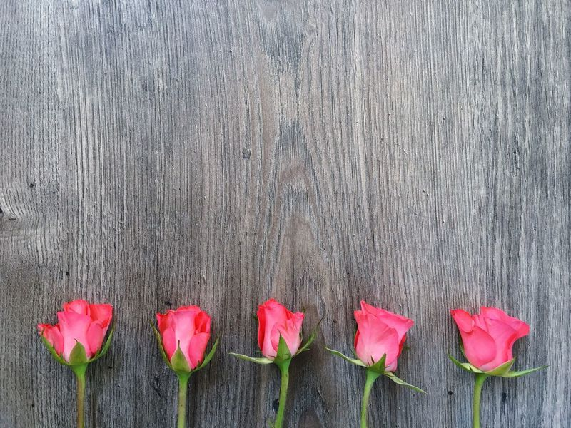 Red roses on a wooden background Flower Pink Color Plant No People Wood - Material Day Nature Outdoors Growth Red Close-up Beauty In Nature Freshness LINE Roses Flower Head Beauty In Nature Fragility