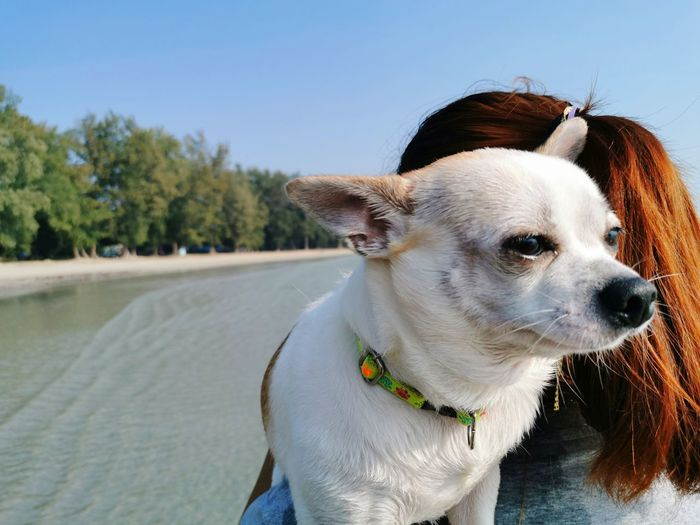 Rear view of woman carrying dog at beach