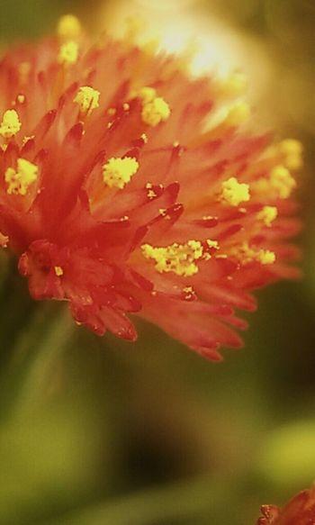Flowers Nature Fotodroiding