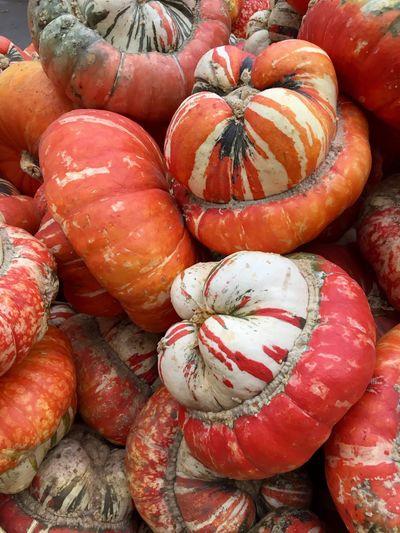 Pumpkin Patch Pumpkin Season Pumpkin Farm Pumpkin Picking Pumpkin Display