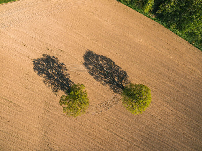 Aerial view of trees on field