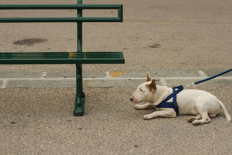 High angle view of dog sitting on bench