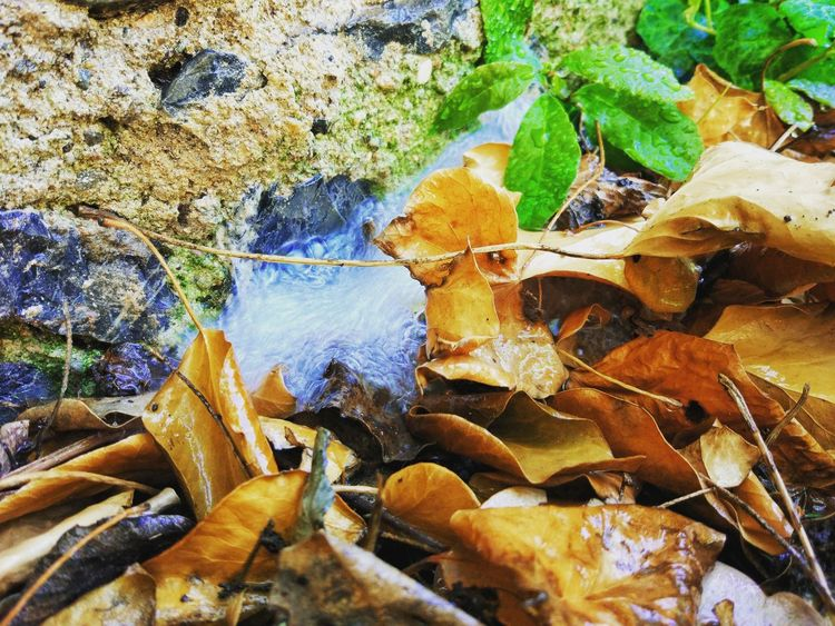 Yesil yapraktır sularsın değerin bilmez,/ Kuru yapraktır sularsın değmez! Leaf Nature Outdoors Beauty In Nature Water Taking Photos PhonePhotography HDR Istanbul Turkey Amateurphotography Bahçe Ve Huzur Garden Work Bağ Bahce
