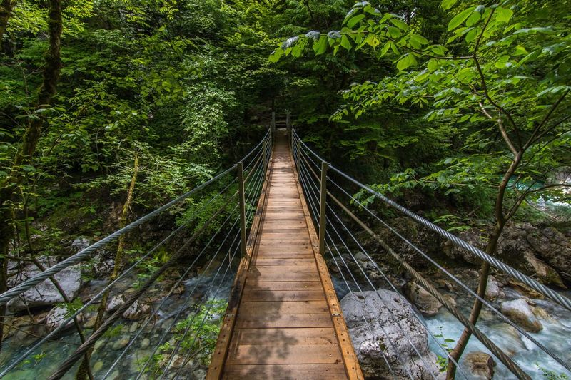 High angle view of footbridge over river in forest