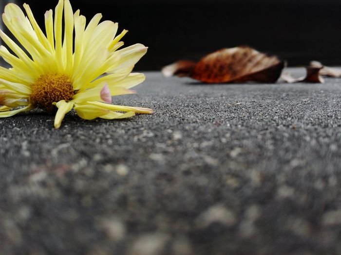 Surface Level Of Yellow Flower On Ground