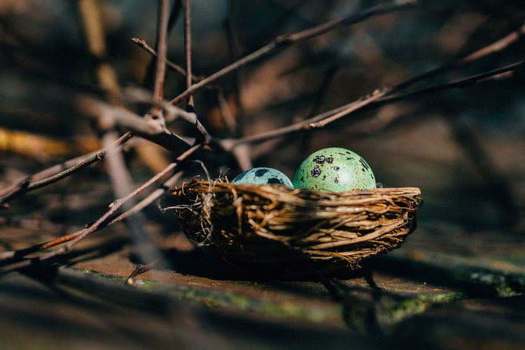 easter eggs Animal Themes Branch Brown Close-up Easter Eggs Easter Ready Focus On Foreground Forest From My Point Of View Getting Inspired Nature Nature Outdoors Plant Selective Focus Wildlife