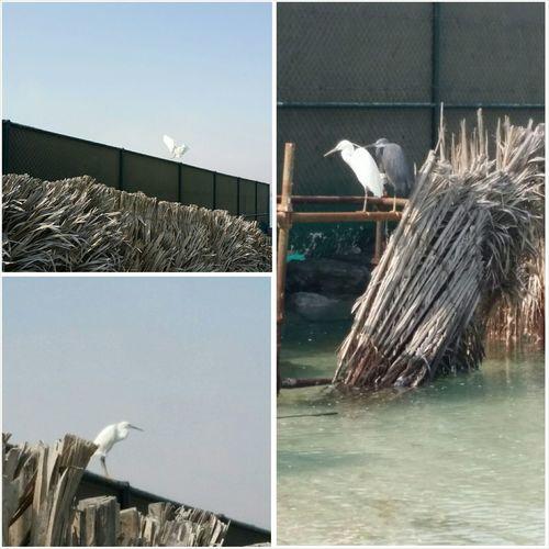 Uae,abudhabi Lovely Birds Beach Photography Sunbathing
