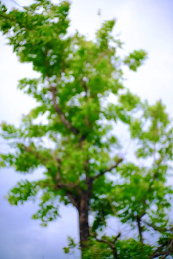 Plant Tree Growth Low Angle View No People Day Beauty In Nature Green Color Nature Outdoors Sky Branch Tranquility Focus On Foreground Close-up Selective Focus Leaf Freshness Plant Part Full Frame
