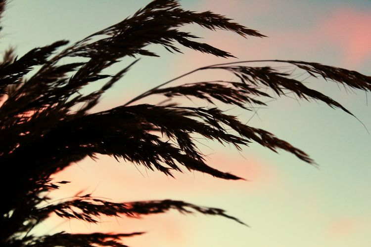 Close-up of plants against sky at sunset