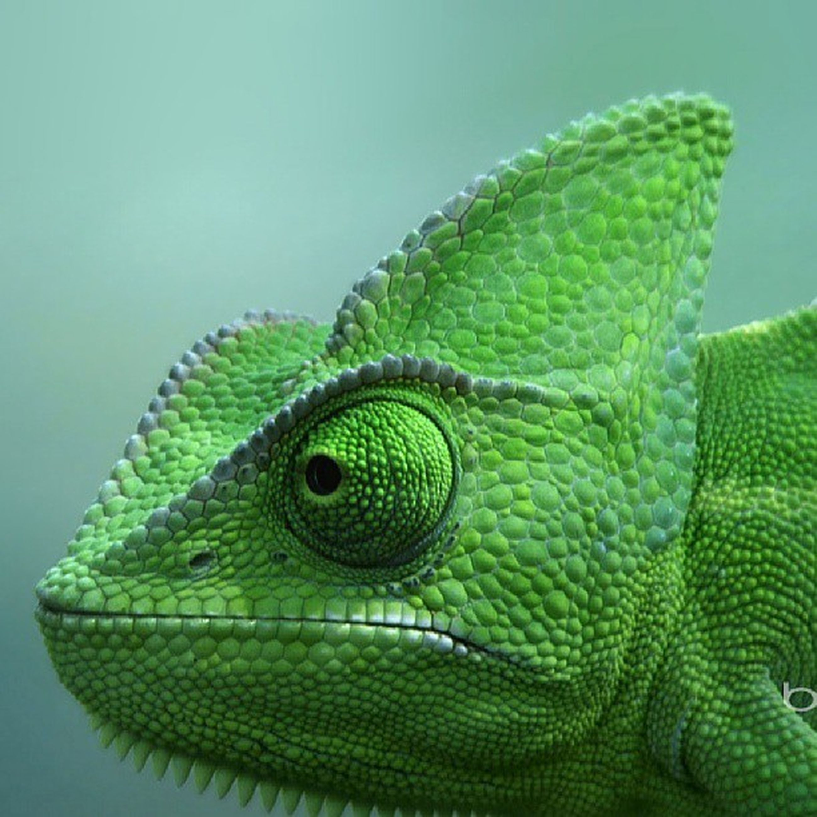 one animal, animal themes, animals in the wild, wildlife, close-up, green color, reptile, natural pattern, lizard, nature, green, beauty in nature, no people, animal head, animal markings, studio shot, day, snake, outdoors, focus on foreground