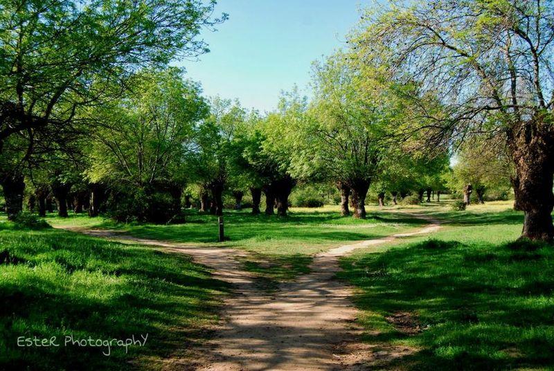 Nature Collection Nature EyeEm Best Shots - Landscape Landscape #Nature #photography