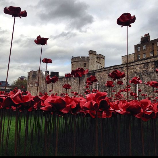 Poppies  Poppy Lest We Forget Remembrance Remembrance Sunday Tower Of London