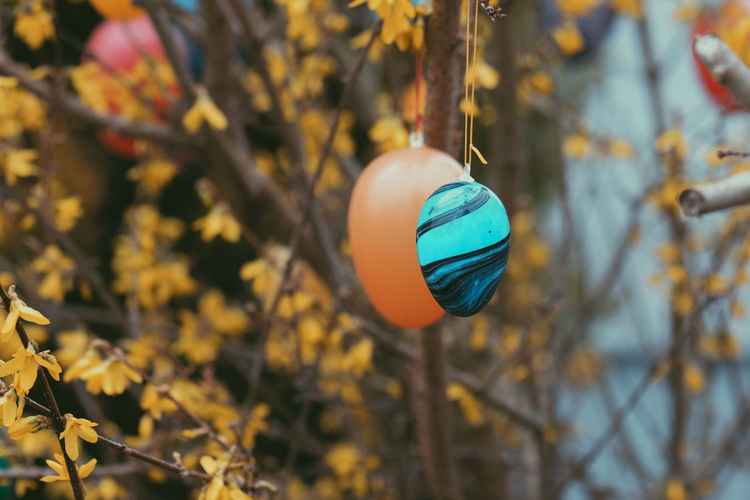 Close-up of crystal ball hanging on tree