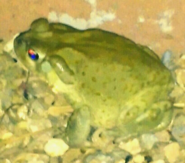 Frogs. Nature