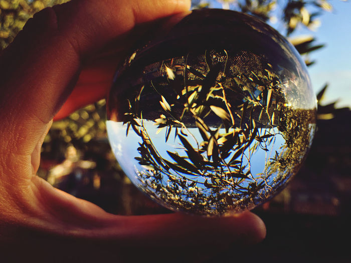 Close-up of hand holding crystal ball on olive tree