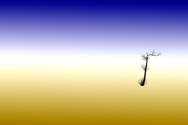 A digital composition using a cutout winter tree and a background using the grphics program's graduated filter. Clear Sky Computer Art Desert Digital Landscape Sand Silhouette Surreal Surrealism Tree Winter