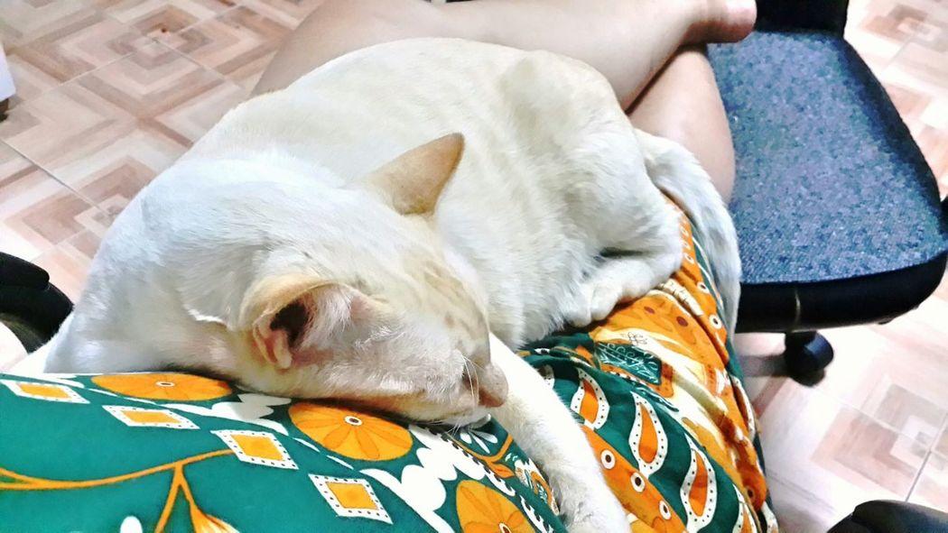"Cat Lovers EyeEm Animal Lover he said "" i love u mum"" and i love him too."