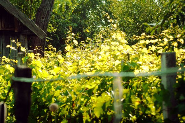 Beauty In Nature Branch Day Flower Fragility Freshness Green Color Growth Leaf Nature No People Outdoors Plant Tree Yellow