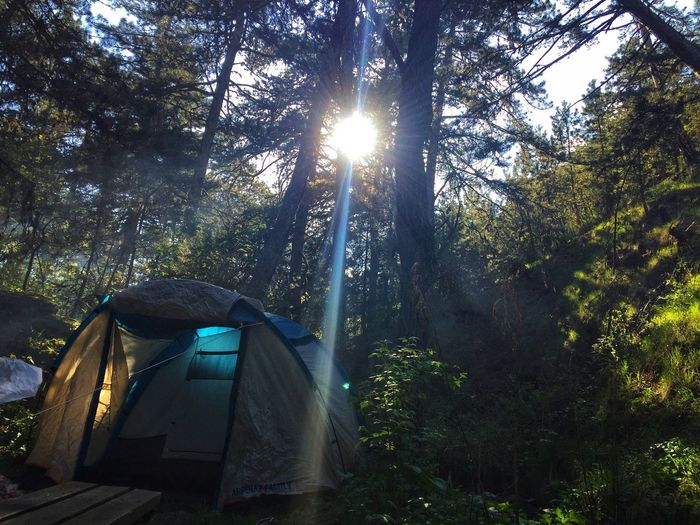 Kızılcahamam'da Kamp 🏕 Alone In The Woods Camping Kamp Tree Plant Nature Sunlight Growth Sunbeam Low Angle View No People Lens Flare Forest Beauty In Nature Tranquility