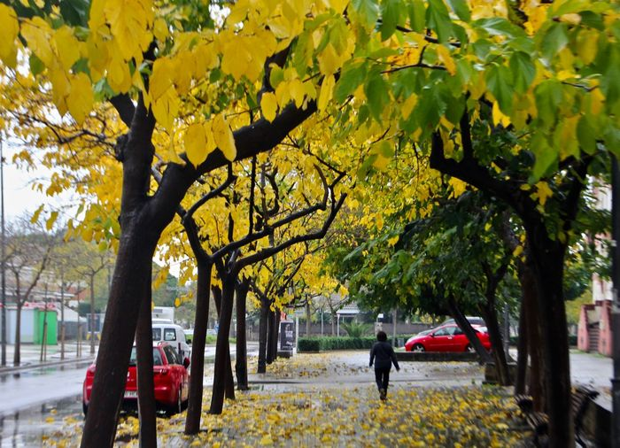 Tree Plant Real People Growth Tree Trunk Trunk Nature Autumn Yellow A New Perspective On Life