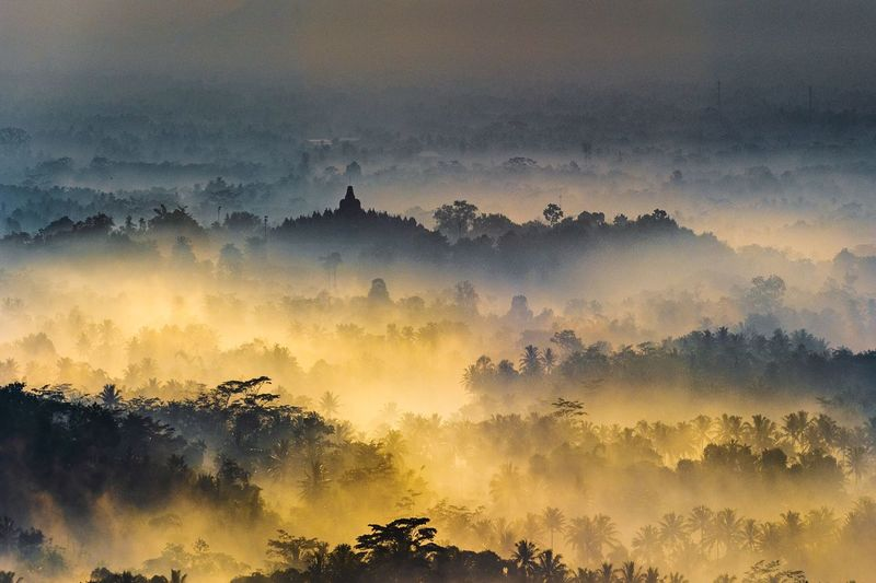 Borobudur golden fog Borobudur Temple INDONESIA Tree Sunset Backgrounds Gold Colored Mountain Religion Full Frame Gold Galaxy Sky Treetop Multi-layered Effect Dramatic Sky Atmospheric Mood Romantic Sky Pagoda Space And Astronomy Thunderstorm
