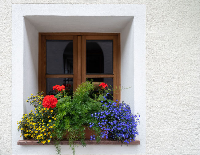 Flowers at the window Yellow Flower Architecture Blue Flower Building Exterior Built Structure Flower Flowering Plant Flowers At The Window Fragility Green Plants Growth Leaf Leaves No People Outdoors Red Flower Wall - Building Feature Window Window Box Window Frame