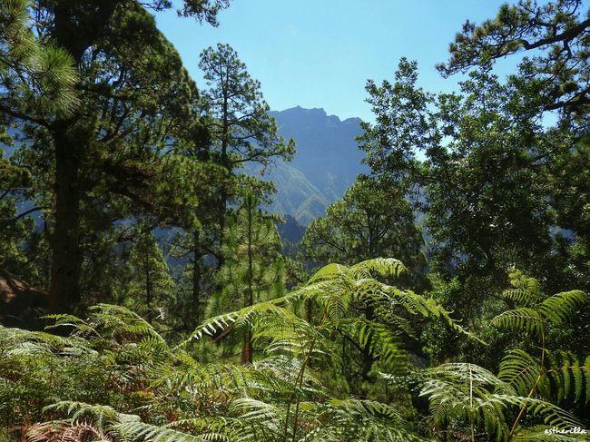 Protecting Where We Play La Palma Nature_collection La Isla Bonita Nikonphotography Nikon Hello World Caldera De Taburiente