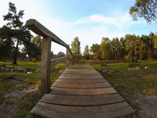 Lüneburger Heide Beauty In Nature Day Grass Growth Nature No People Outdoors Scenics Sky Steps The Way Forward Tranquil Scene Tranquility Tree