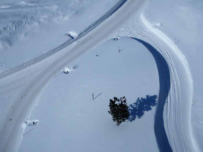 High Angle View Of Tree On Snow Covered Landscape