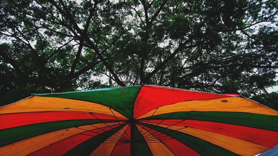 UnderTree Big Tree Big Umbrella Tree Multi Colored Close-up Sky Umbrella