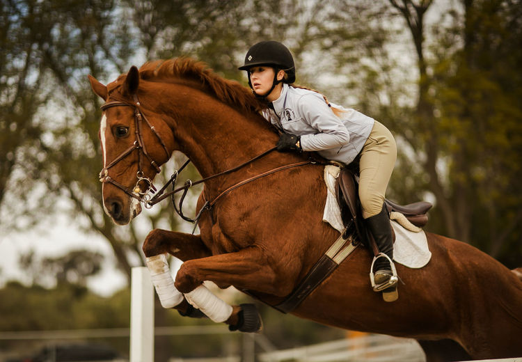 Adult Animal Themes Bridle Brown Competition Day Domestic Animals Headwear Horse Horse Racing Horseback Riding Jockey Jumping Mammal One Animal One Person People Portrait Riding Saddle Showjumping