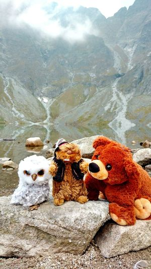 Mountain Togetherness No People EyeEmNewHere Autumn🍁🍁🍁 Mountains Travel Landscapes Wild Life Bear Grizzly Animal Animals Marmot Góral Animals In The Wild Owl Teddy Bear Stuffed Toy Tatry Wild Animal Poland Eye Em Nature Lover Adventure Nature The Great Outdoors - 2017 EyeEm Awards